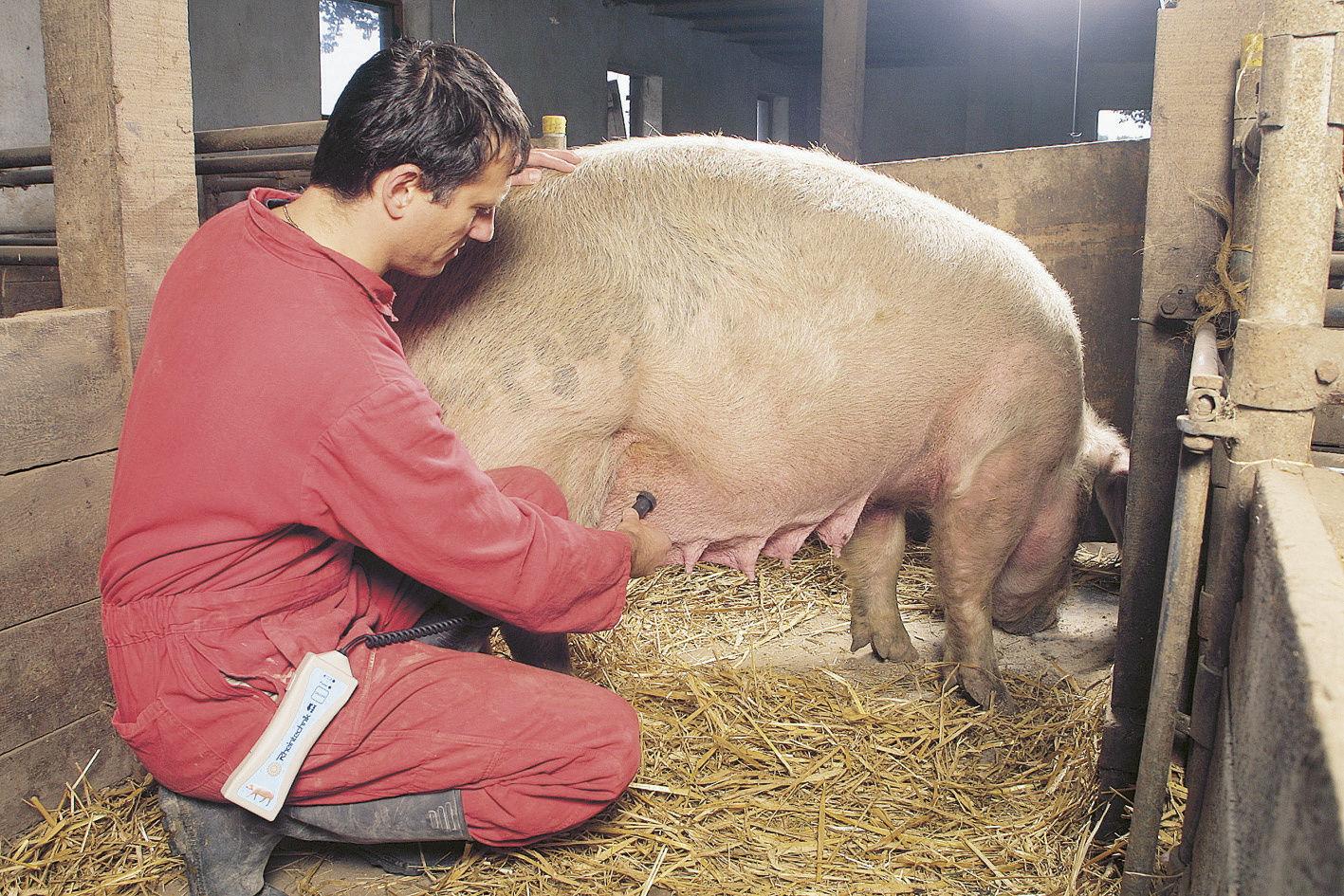HK Trächtigkeitsdiagnosegerät Schweine, mit Kabel