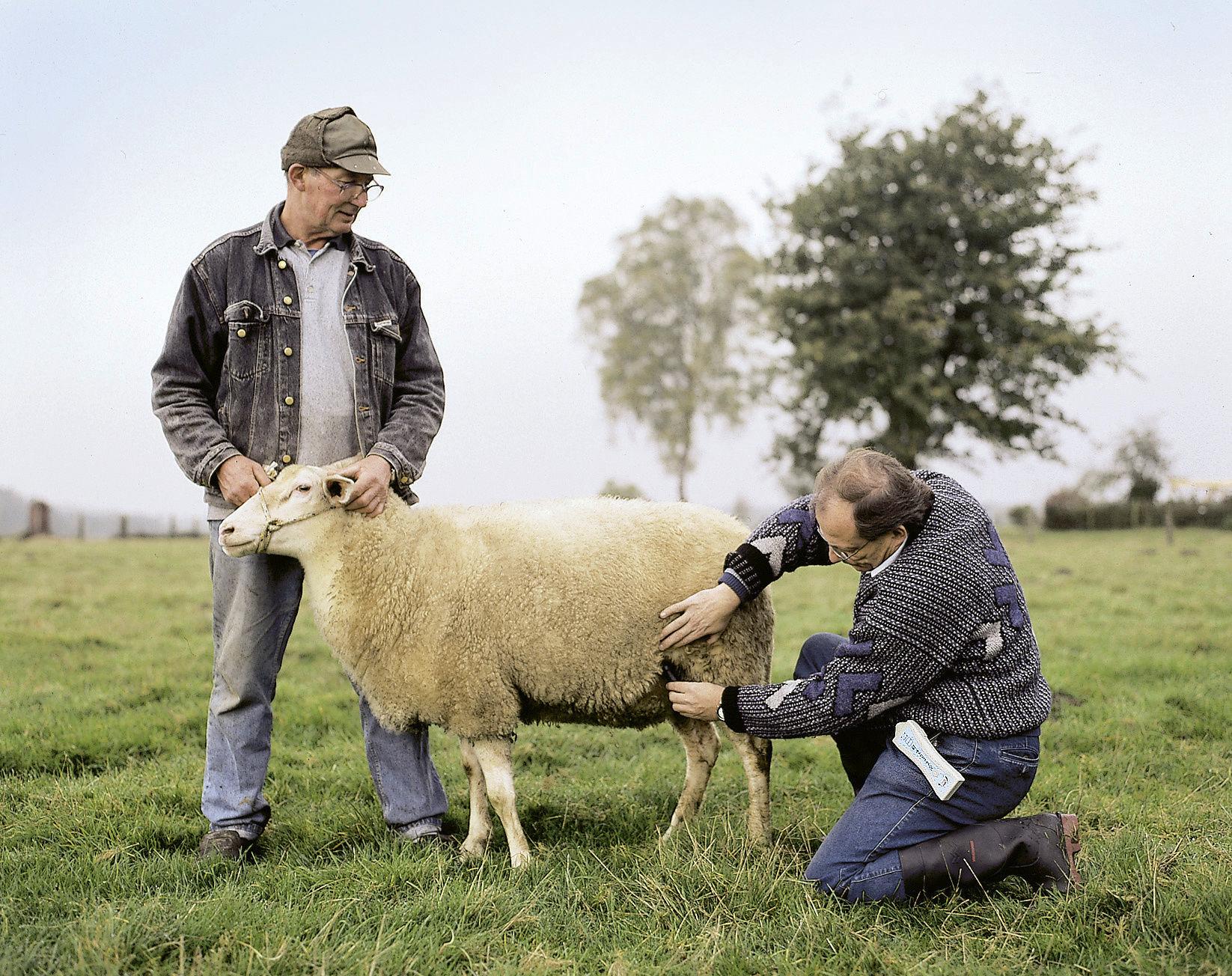 HK Trächtigkeitsdiagnosegerät Schafe, Ziegen, Alpaka